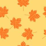 Teste padrão sem emenda rabiscado das folhas de bordo Imagens de Stock