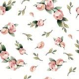 Teste padrão sem emenda tirado da flor do rosa da pintura da aquarela mão pastel Imagens de Stock Royalty Free