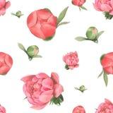 Teste padrão sem emenda tirado da flor do rosa da pintura da aquarela mão pastel Fotos de Stock