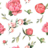 Teste padrão sem emenda tirado da flor do rosa da pintura da aquarela mão pastel Fotografia de Stock
