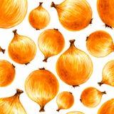 Teste padrão sem emenda tirado mão da aquarela com cebolas do bulbo Imagem de Stock Royalty Free