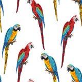 Teste padrão sem emenda tropical com papagaios Ilustração do Vetor
