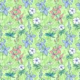 Teste padrão sem emenda verde das flores selvagens Fotos de Stock Royalty Free