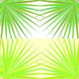 Teste padrão simétrico com folhas de palmeira no fundo branco Imagens de Stock