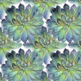 Teste padrão suculento da planta do cacto no fundo branco Fotos de Stock Royalty Free