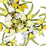 Teste padrão tirado do narciso amarelo do vetor da mola mão sem emenda ilustração royalty free