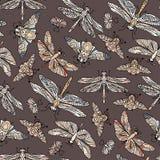 Teste padrão tirado do vetor mão sem emenda com borboletas, libélulas, besouros, erros e mothes da fantasia Foto de Stock Royalty Free