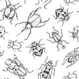 Teste padrão tirado dos besouros mão sem emenda imagens de stock