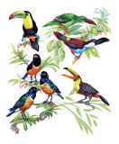 Teste padrão tirado mão da aquarela com as flores tropicais do verão de e os pássaros exóticos Foto de Stock Royalty Free