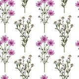 Teste padrão tirado mão do wildflower Imagens de Stock