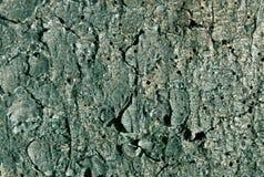 teste padrão tonificado ciano da casca de pinheiro fotografia de stock