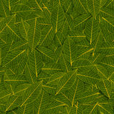 Teste padrão transparente da folha do verde amarelo Fotos de Stock Royalty Free