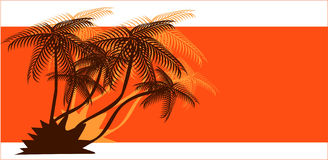 Teste padrão tropical Foto de Stock Royalty Free