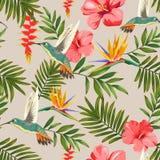 Teste padrão tropical com flores e colibris ilustração royalty free