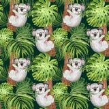 Teste padrão tropical na moda da aquarela com coala pintado à mão, palma e folha do monstera em escuro - fundo verde verão botâni ilustração royalty free