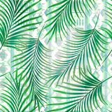 Teste padrão tropical sem emenda com folhas de palmeira verdes Imagem de Stock Royalty Free