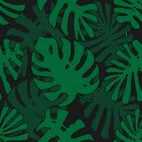 Teste padrão tropical Textura sem emenda com as folhas tiradas mão da árvore exótica ilustração royalty free