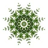 Teste padrão verde abstrato da mandala da flora do fundo, v de escalada selvagem foto de stock royalty free