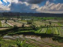 Teste padrão verde Bali dos terraços do arroz, Indonésia imagens de stock