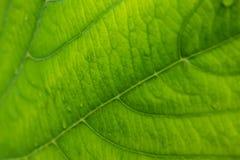Teste padrão verde bonito da textura da folha Fotos de Stock Royalty Free