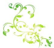 Teste padrão verde da flor e das videiras Foto de Stock