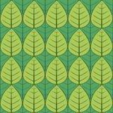 Teste padrão verde da folha Fotografia de Stock Royalty Free