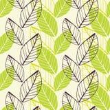 Teste padrão verde da mola da folha Fotos de Stock