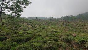 Teste padrão verde do jardim da folha (mar foto de stock