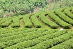 Teste padrão verde do jardim da folha (mar Fotografia de Stock Royalty Free