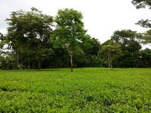 Teste padrão verde do jardim da folha (mar Foto de Stock Royalty Free