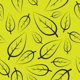 Teste padrão verde fresco das folhas Imagens de Stock Royalty Free