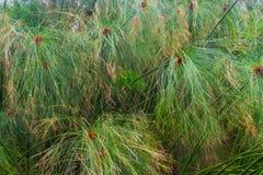 Teste padrão verde natural da textura do fundo da folha do jardim Foto de Stock Royalty Free