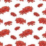 Teste padrão vermelho dos zinnias Fotografia de Stock Royalty Free