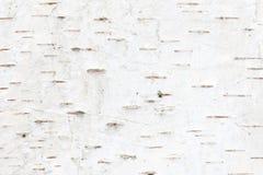 Teste padr?o da casca de vidoeiro com as listras do vidoeiro preto na casca de vidoeiro branco fotografia de stock