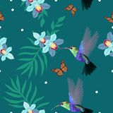 Teste padr?o sem emenda com colibris, orqu?deas, folhas de palmeira, borboletas de monarca A ilustra??o do vetor, pode ser usada  ilustração do vetor