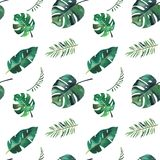 Teste padr?o sem emenda da aquarela desenhado ? m?o Folhas tropicais verdes no fundo branco ilustração royalty free