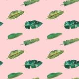 Teste padr?o sem emenda da aquarela desenhado ? m?o Folhas tropicais verdes no fundo cor-de-rosa ilustração stock
