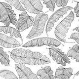 Teste padr?o sem emenda das folhas ex?ticas, brancas da banana com esbo?os pretos isolados em um fundo transparente ilustração do vetor