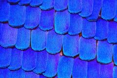 Teste padrão afiado e detalhado extremo da asa da borboleta Imagens de Stock