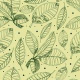 Teste padrão com as folhas do café da carta branca Fotografia de Stock Royalty Free