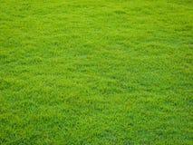 Teste padrão da grama verde do campo de golfe no por do sol tim Imagens de Stock Royalty Free