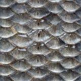 Teste padrão sem emenda das escalas de peixes Imagens de Stock Royalty Free