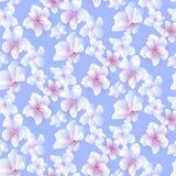 Teste padrão sem emenda do hanami de Sakura Fotografia de Stock