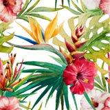 Teste padrão tropical de Sterlitzia Fotografia de Stock