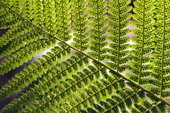 Teste padrão abstrato do Fern Foto de Stock Royalty Free