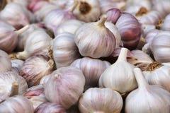 Teste porpora dell'aglio, vista dettagliata Fotografia Stock Libera da Diritti