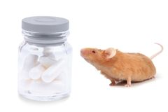 Tested on animals Stock Photos