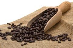 Testende koffiebonen Royalty-vrije Stock Fotografie