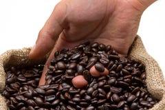 Testende koffiebonen Stock Afbeeldingen