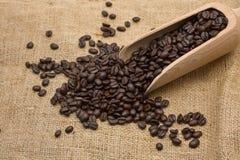 Testende koffiebonen Royalty-vrije Stock Foto